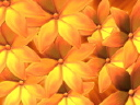 Royalty Free Video of Yellow Flowers