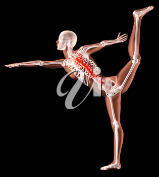 3D render of a female medical skeleton in a yoga position with spine highlighted