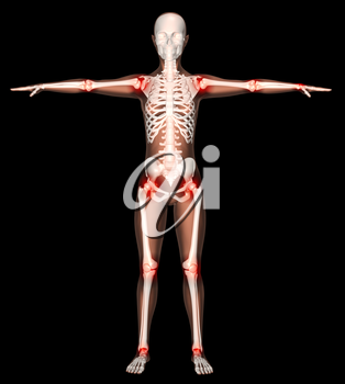 3D render of a female skeleton with main joints highlighted
