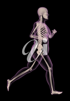 3D render of an overweight female medical skeletong running