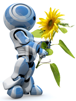 A glossy reflective 3d robot looking in awe at a large sunflower isolated.