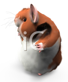 A hamster turned to the side looking happy, possibly waving at someone, or looking at text or design elements to the left.