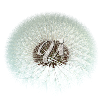 Dandelion seeds ready to take to the wind! 3d render based on experimentation with the golden ratio Fibonacci sequence. Isn't nature inspiring?