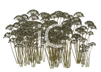 Royalty Free Clipart Image of Dried Plants