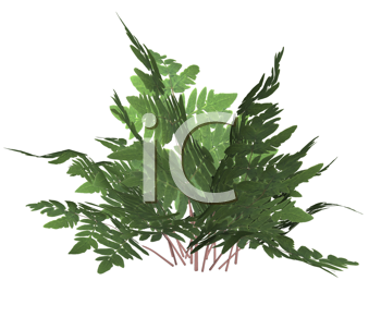Royalty Free Clipart Image of a Forest Fern