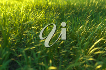 Green grass and bright field,natural scenery,3d rendering. Computer digital drawing.