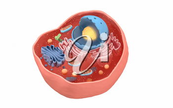 Internal structure of an animal cell, 3d rendering. Section view. Computer digital drawing.