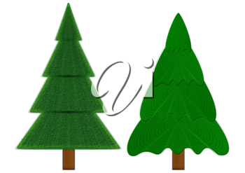 Two evergreen fir-trees isolated on a white background