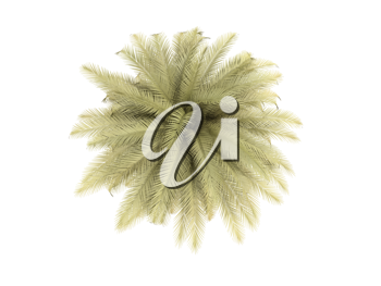 Royalty Free Clipart Image of a Palm Tree