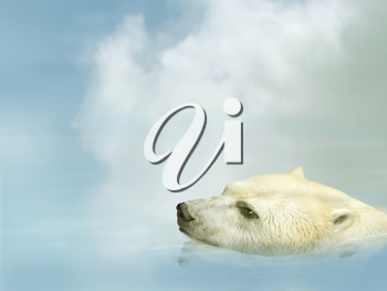 Royalty Free Clipart Image of a Polar Bear