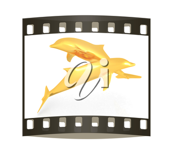 golden dolphin on a white background. The film strip
