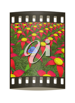 One individuality blue hat on a flower. The film strip