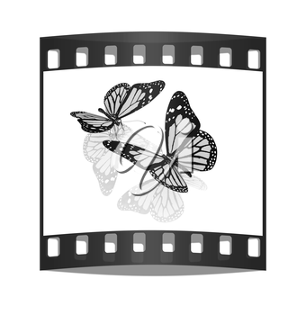 Butterfly on a white background. The film strip