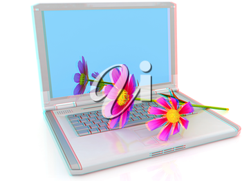 cosmos flower on laptop on a white background. Anaglyph. View with red/cyan glasses to see in 3D. 3D illustration