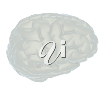 3D illustration of human brain