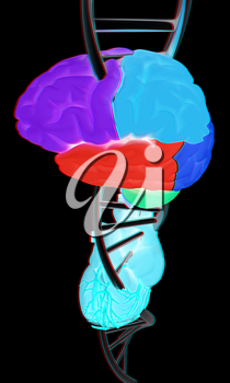 DNA, brain and heart. 3d illustration. Anaglyph. View with red/cyan glasses to see in 3D.