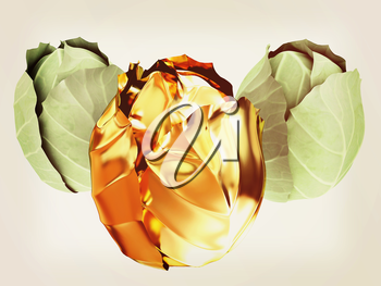 green cabbage and gold cabbage isolated on white background. 3d illustration. Vintage style