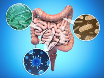 Bacteries of human intestine, Intestinal flora gut health concept. 3d illustration
