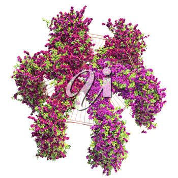 Large bush of purple flowers on a metal arch. Curly ivy with purple flowers pergola